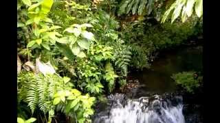 sound of the jungle water stream - relax or make a loop for TV screen