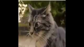 قطة تفكر- cat think -funny cats- Funny Cat Videos - Funny Animals