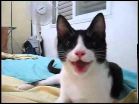 قطة عايشة فى دور كلب