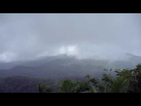 El Yungue Rainforest 18