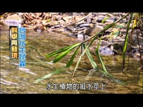 科學再發現 台灣水生昆蟲-民視新聞 - YouTube