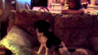 My Puppy Jake howling to the M.A.S.H Theme Song