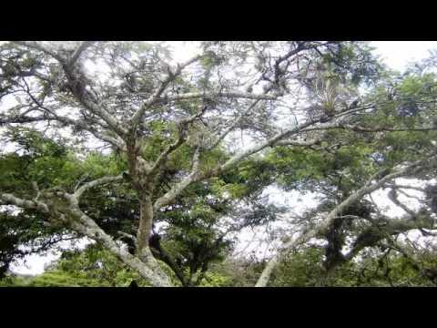 Nicaragua, terre de lacs, de volcans et d'aventure