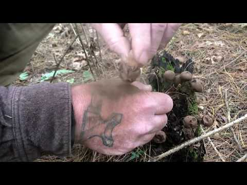 5 Minutes to better Bushcraft other uses for Puffball Mushroom