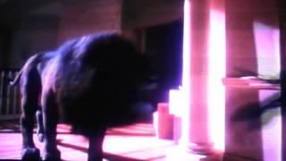 Jumanji - Lion Scene