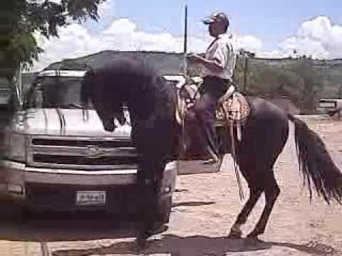 Borracho Y Necio de El Rm Letra y Video