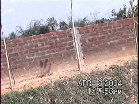 A piece of land Daspara Khadim Sylhet