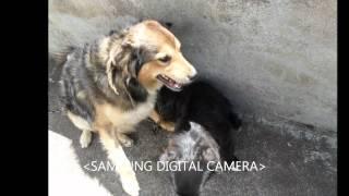 os meus cães Xano, Puca e Bresica