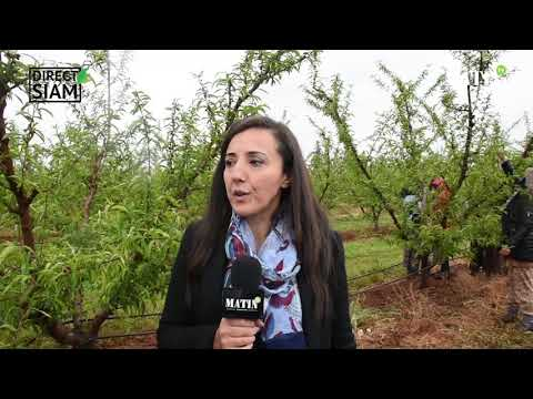 Mayssera, la nouvelle huile d'olive du Groupe Zniber bientôt commercialisée