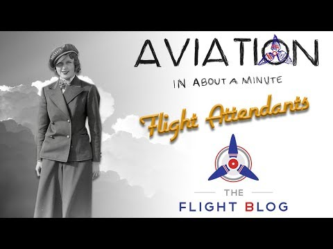 Aviation in about a minute pigeons war flight attendants video