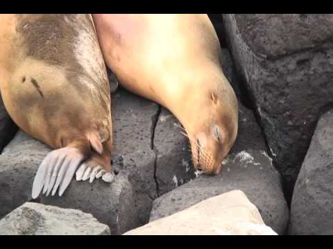 In Six Minutes: Ecuador and The Galapagos Islands