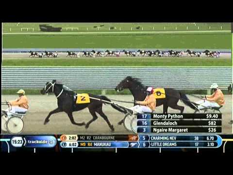 Brilliant first up win by royally bred trotter :: Harnesslink