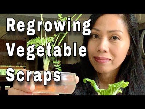 Regrowing Vegetable Scraps