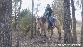 Sheza Expensive Leo - trail riding #2 - Valley View Ranch