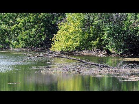 Magyarország is része a világ első, öt országon átívelő bioszféra-rezervátumának
