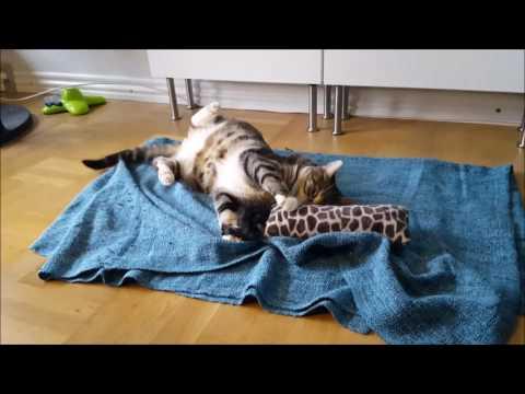 Aktivering af indekatten - Baldrian/Catnip