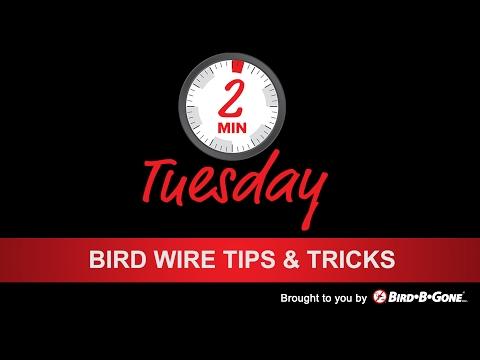 Bird Wire Tips & Tricks