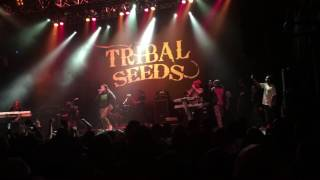 Mighty Mystic & Tribal Seeds Vampire live at HOB