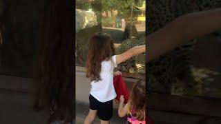 Jaguar Plays With Kids || ViralHog