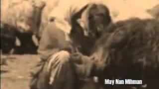 Kutup Yıldızı - Brindarım