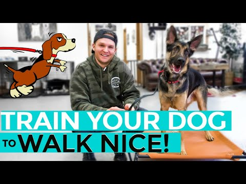 How to leash train your dog not to pull + dog training loose lead walking