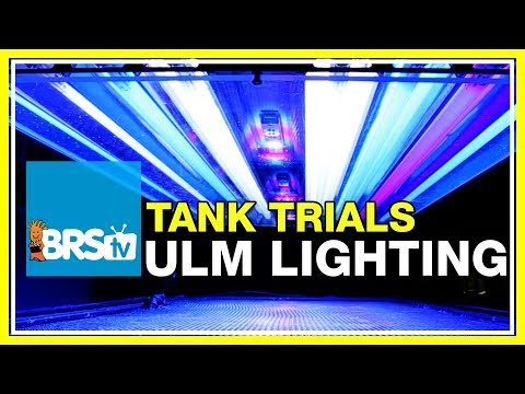 ULM Tank Trials Ep-11: Lighting for Ultra Low Maintenance | BRStv