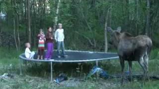 Een Eland wil springen