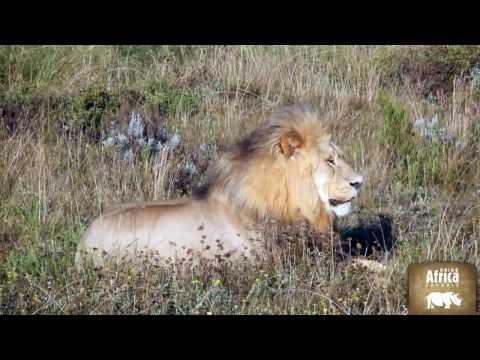 Kruger National Park | Rhino Africa