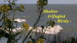 Birdy - Shelter, traduzione