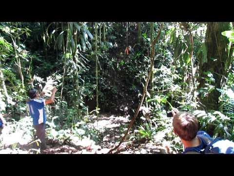 Yet another Tarzan!