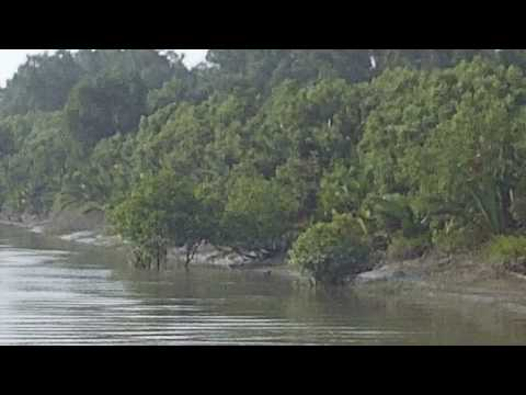 White Egret Sundarban.MOV