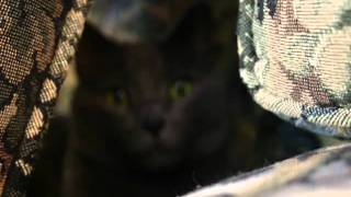 Peter Kessel- Animal- 3rd Hour