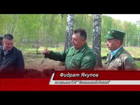 Всероссийский день посадки леса в Илишевском районе Республики Башкортостан