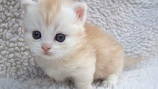 Top 10 Cute Baby Animal Videos 2017 [CUTE]