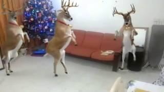 Música de natal com renas dancando
