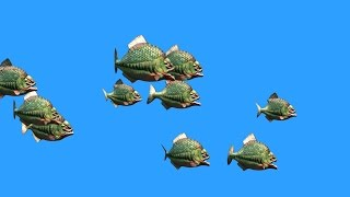 Green Screen Group Fish Piranha Attack - Footage PixelBoom