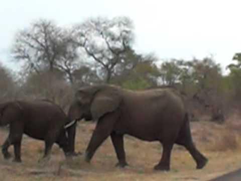 Elefantes – Krueger National Park, África do Sul '09