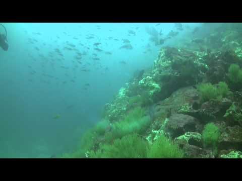 Ecuador Galapagos Gordon Rocks