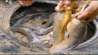 National Fishing - Find Catfish in Secret old car Wheel by Smart Man - Farmer Catch Giant Big Fish