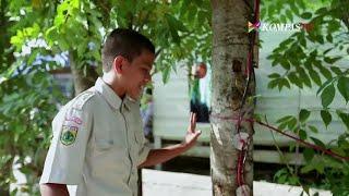 Bagaimana Pohon Kedondong Menghasilkan Listrik?