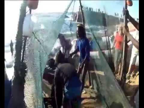 Sardine Run South Africa