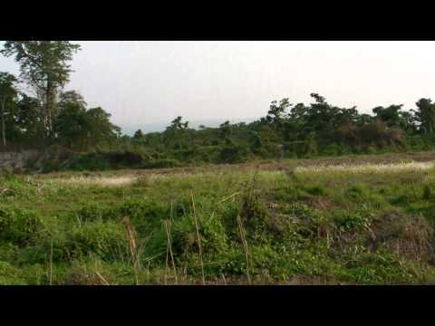 Elephant breeding centre / Chitwan National Park