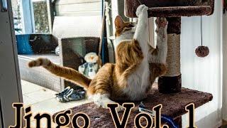 Jingo Unchained - Vol. 1