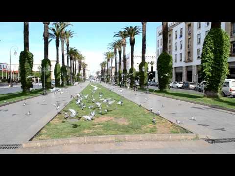 Fliegende tauben in Rabat (Marokko 2011)