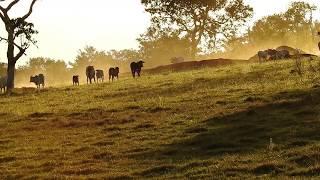 Sons do entardecer na roça, O canto do Jaó, Vida no campo, Fazenda Santa Rita de Cássia,