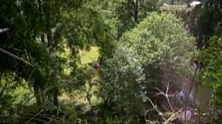 TDHAL Canopy la Isla- Aspirante Pajarito