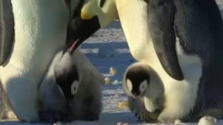 Pai cansado de ver seu filhote sofrer bullying dá lição em pinguim