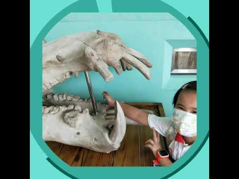 1090924動物園校外教學 - YouTube