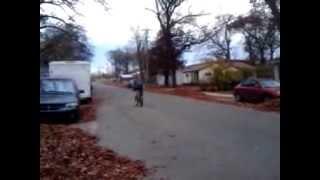 3 tap on bmx bike steven cruz