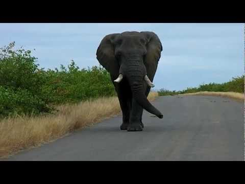 Kruger National Park, South Africa May 2012